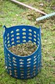 Blue plastic basket full of lawn thatch on green lawn