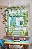 Kletterpflanzen umranken ein Fenster, Tisch mit bunter Platte