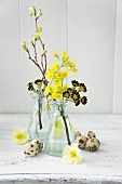 Spring arrangement of sprigs of different primulas and quail eggs
