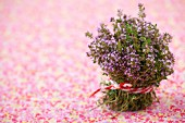 Bunch of fresh, flowering thyme on floral tablecloth