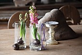 Hyazinthen stehen in Gläsern mit Wasser auf rustikalem Holztisch