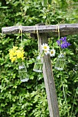 Aquilegia, rapeseed flowers and ox-eye daisies in small suspended glass bottles