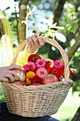Girl holding basket of apples and zinnias