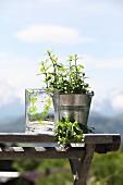 Mit Pflanzenmotiv bemalte Glasvase neben Kräutertöpfchen auf Vintage Bank