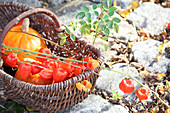 Physalis seed heads and pumpkin in basket on cobbles