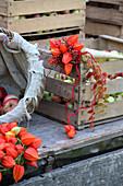 Strauß aus Hagebutten und Lampionblüten auf einer Apfelkiste