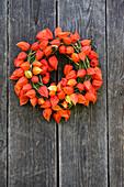 Mooskranz mit Lampionblumen an einer verwitterten Holzwand