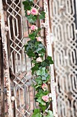 Romantic garland of ivy and pink roses on vintage lattice