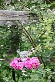 Hängendes Windlicht mit einem Kranz aus pinken Hortensienblüten