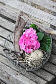 Sickle, scissors, pink hydrangea and parcel string in wire basket