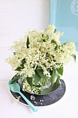 Fresh elder flowers and leaves in drinking glass in front of turquoise tray