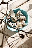 Pieces of coral and seashells in pale blue ceramic bowl on rustic piece of driftwood