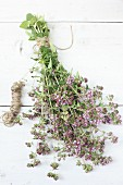 Bunch of flowering oregano