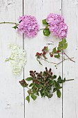 Hydrangeas, blackberries and raspberries on white boards