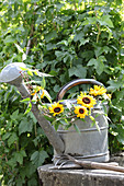 Sunflowers and clematis tendrils arranged in vintage watering can