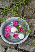 Pink dog roses and viburnum flowers floating in metal bowl