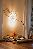 Various pumpkins in corner of brightly lit room