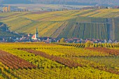 Colourful autumn vineyards (Escherndorf, Franconia, Bavaria, Germany)