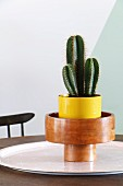 Cactus in yellow pot and wooden bowl on round tray