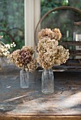 Dried hydrangeas in old glass bottles