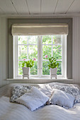 Sunshine on bed below window with potted geraniums on sill