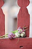Quail eggs and snake's head fritillaries on red picket fence