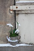 Delicate paper snowdrops and moss in mug