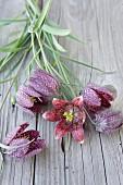 Liegende Schachbrettblumen auf rustikaler Holzunterlage