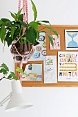Houseplant in glass pot in pink macramé plant hanger in front of pin board