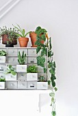 Various houseplants on and in chest of drawers