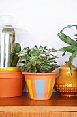 Succulents in painted terracotta pots