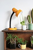 Various succulents and table lamp on shelved