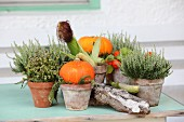 Autumnal arrangement of plants with white heathers, orange pumpkins, corn cobs and bark on vintage wooden table