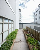 Urban gardening: various vegetable plants growing in wooden crates on roof terrace