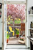 View of flowering narcissus on bright, spring balcony