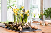 Arrangement of narcissus, moss and quail eggs in glass bowl