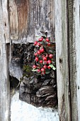 Posy of rose hips in weathered wooden beam on rustic board wall