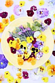 Various edible flowers on yellow plate