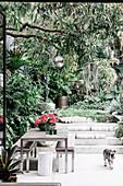 Tisch mit Bänken und Hund auf begrünter Terrasse mit Treppenstufen