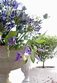 Bepflanzete Amphore mit lilafarbenen Blüten neben grünem Zimmerbäumchen