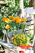 Orange tagetes in rusty zinc tub on vintage garden chair