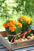 Tagetes mit grünen Blättern und Geschenkbändern zusammengebunden in Holzkiste mit Aprikosen
