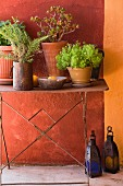 Pots of herbs and lanterns on rustic metal-framed table