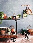 Plants, plant pots and vegetables on vintage workbench against gray wall