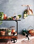 Pflanzen, Pflanzentöpfe und Gemüse auf Vintage Werkbank vor grauer Wand