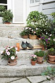 Potted flowering plants and DIY cane shoe rack on stone steps