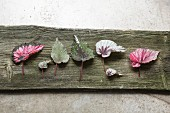 Arrangement of various Rex begonia leaves lying on wooden board