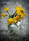 Daffodils in a glass of water