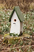 Bird nesting box on tree stump surrounded by snowdrops