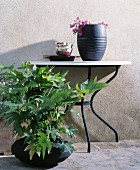 Vase and crockery on console table next to foliage plant in black container
